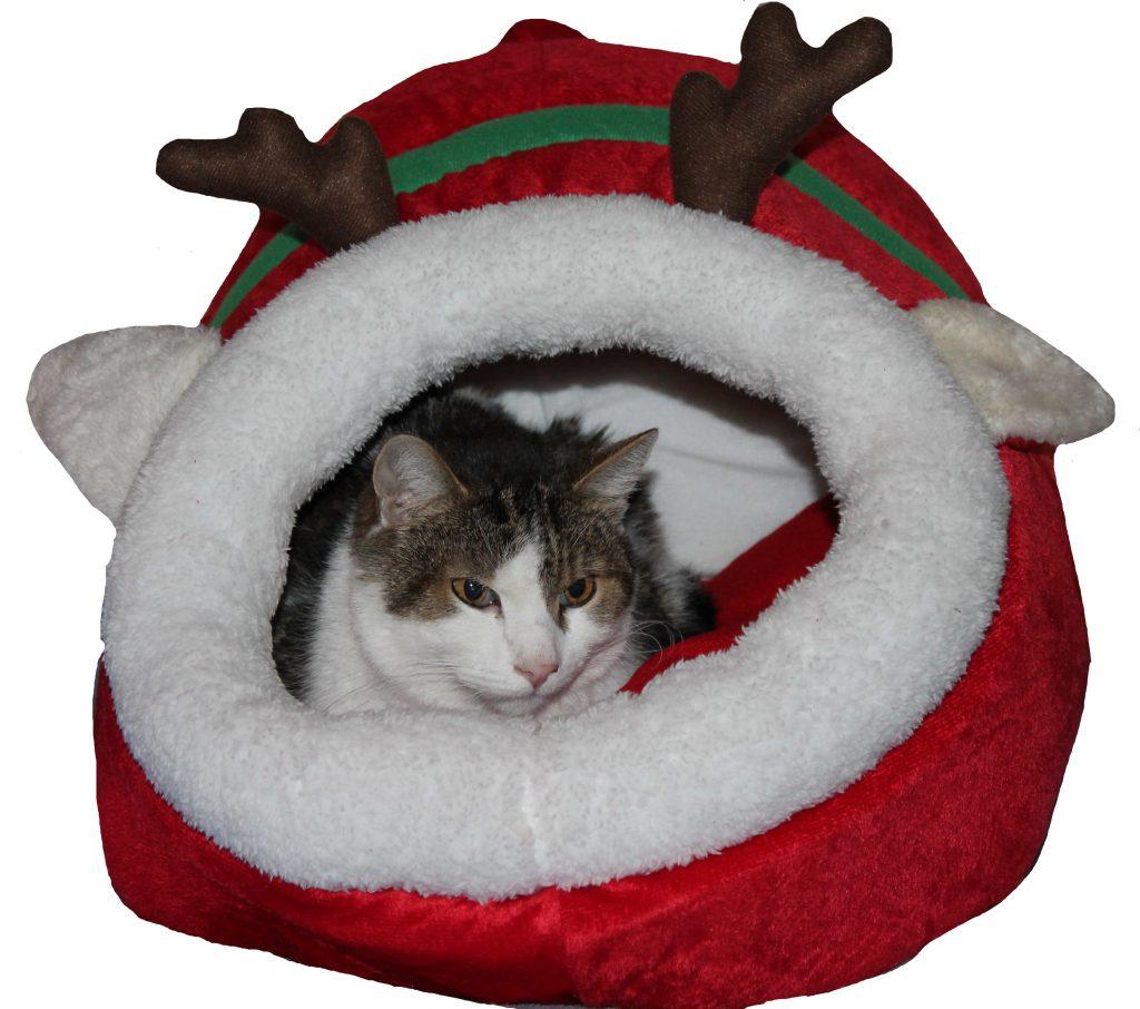 Kater Simon sitzt in seinem Weihnachtsrentier und wartet gespannt auf das neue Katzenhaus