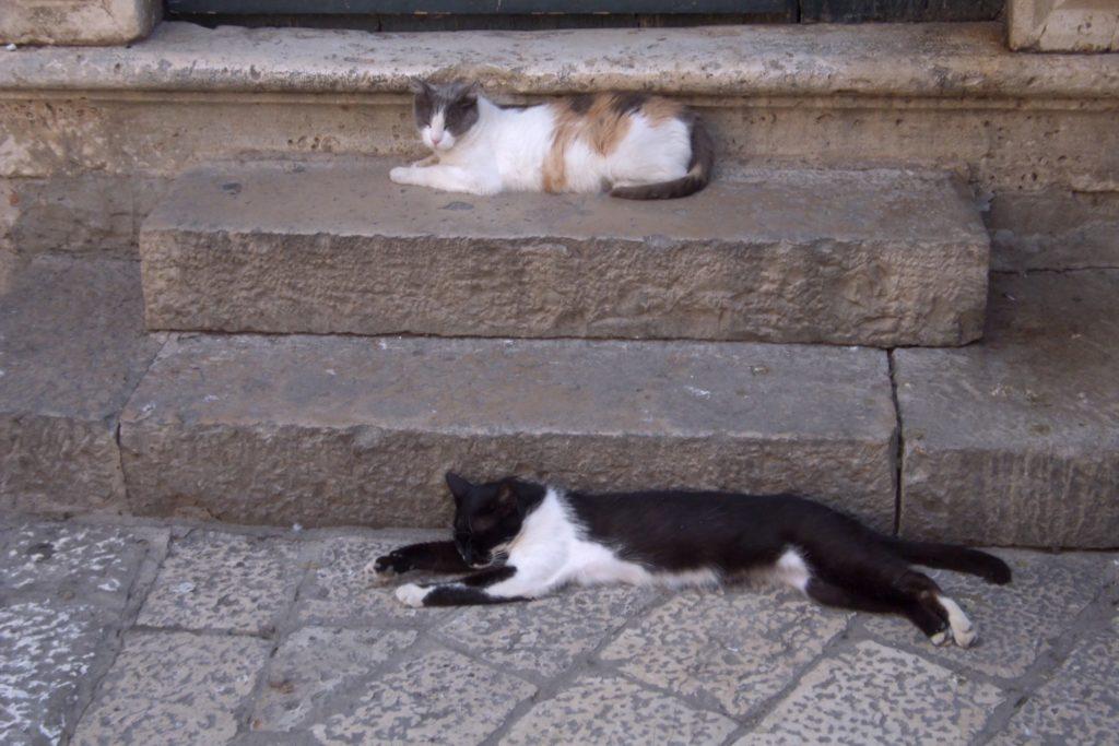 freilaufende Katzen liegen auf einer Treppe