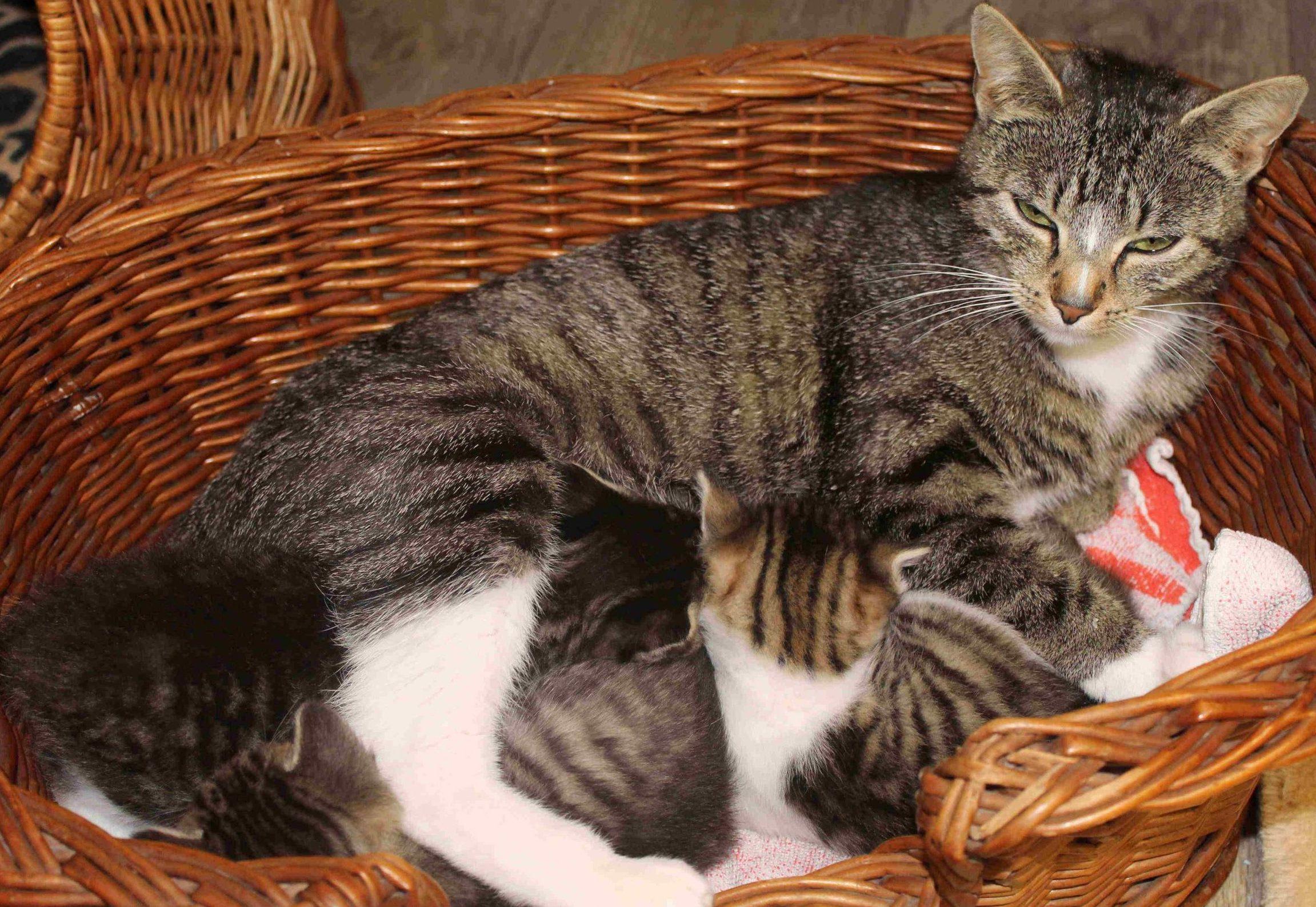 Startbild des Abschnittes über uns eine Mutter mit säugenden Kitten in einem Weidenkorb