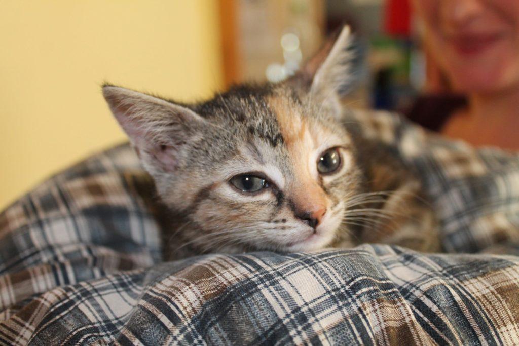 ein Kitten sitzt auf einem Kissen im Katzenhaus