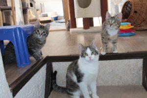 Drei Kitten schauen neugierig auf die Besucher